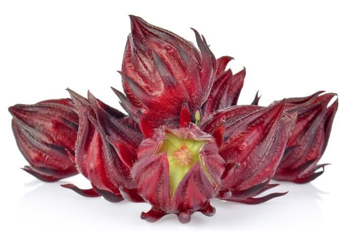 hibiscus (Afrika gülü Arap gülü)
